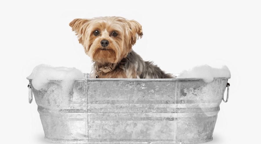بهترین شامپو سگ