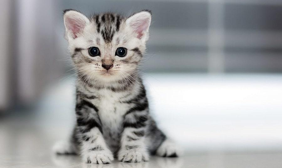 شامپو گربه