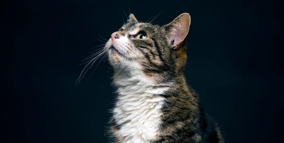 بهترین غذای خشک گربه