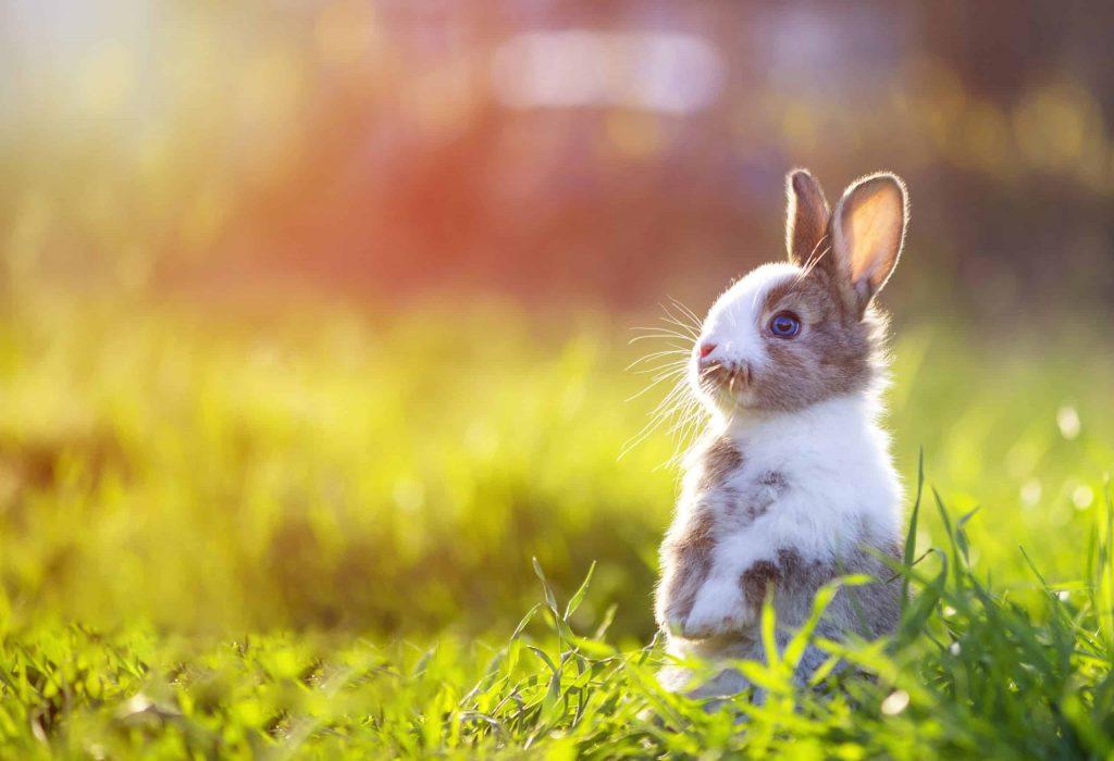 پلت غذای خشک خرگوش