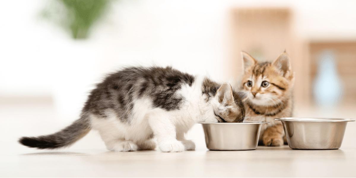 بهترین کنسرو غذای گربه