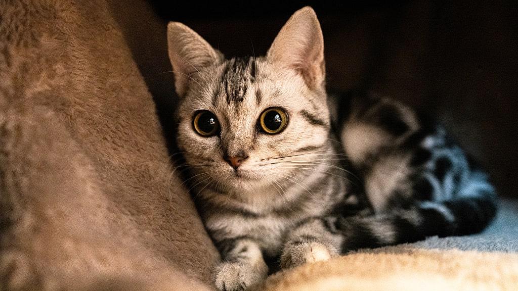 غذای خشک گربه پارمی